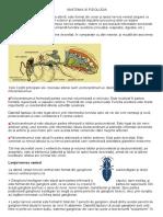 T 3 Anatomia Si Fiziologia