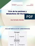 Ciclo de Las Pentosas y Metabolismo Del Glucógeno