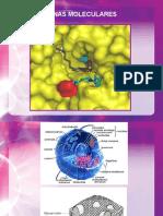 1. FQ I Dianas Moleculares 2015-03