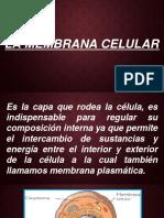 LA MEMBRANA CELULAR.pptx