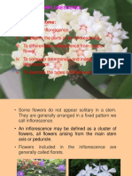 lecture 6 - Inflorescence.pdf