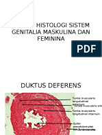 REVIEW HISTOLOGI SISTEM GENITALIA MASKULINA DAN FEMININAOK.ppt