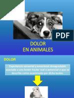 15. Dolor en Animales