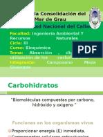 Absorción , Digestión y Utilización de Los Carbohidratos