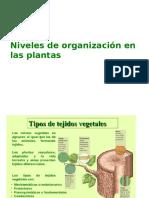 niveles de organizacion en las plantas