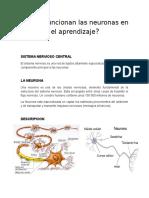 Como Funcionan Las Neuronas en El Aprendizaje