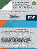 Bacilluscereusmicrobiologia 150525144225 Lva1 App6891