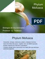 10 Phylum Mollusca