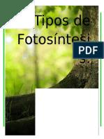 Tipos de Fotosíntesis