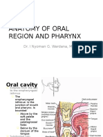 Anatomy of Oral Region and Pharynx