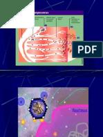 Estructura Del Virus