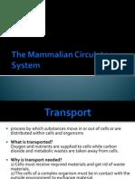 9.2 Mammalian Circulatory System