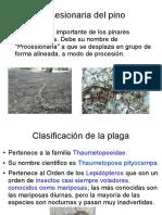 Procesionaria del pino (Thaumetopea Pityocampa)