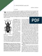 Clasificacion taxonomica de curculionidae Anderson2002