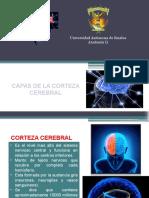 Configuracion Interna Del Encefalo
