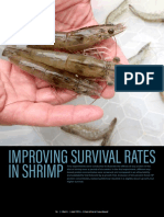 Improving survival rates in shrimp
