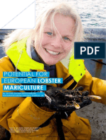 Potential for European Lobster Mariculture