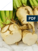 Qualities of monogerm male-sterile sugar beet lines