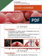 Fisiología Humana - Metabolismo Del Hierro - 2016