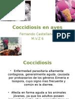 Coccidiosis en Aves