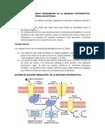 Acción de La Sustancia Transmisora en La Neurona Postsináptica (1)