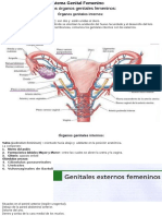 Organos Genitales