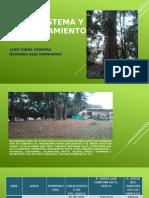 El Ecosistema y Su Funcionamiento