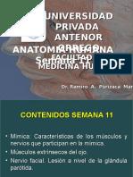 Miología de la Cara