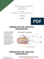 Inervación Motora y Sensitiva Del Músculo Esquelético