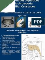Aula Classe Crustacea UFRA