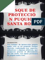 Bosque de Protección Puquio- Santa Rosa