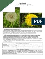 schede-piante-spontanee