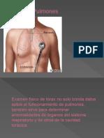 tórax y pulmon