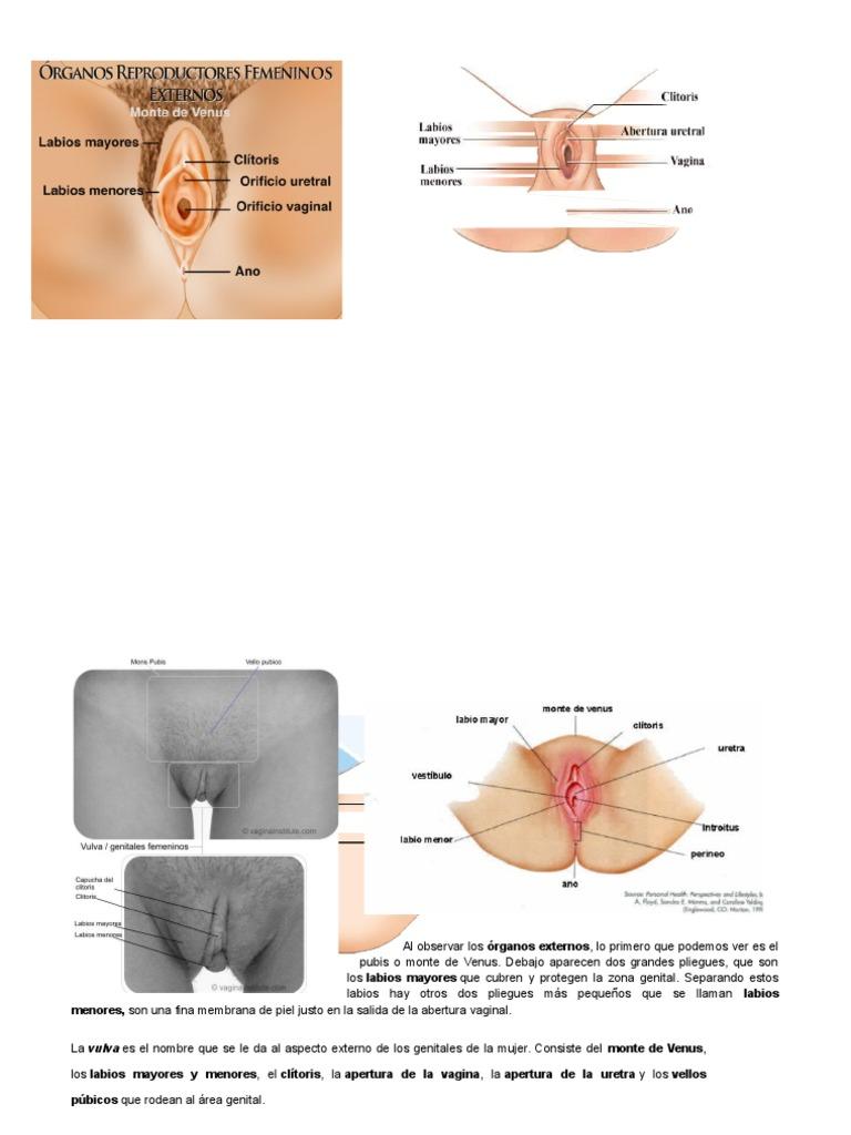 Contemporáneo Menor órganos Anatomía Back Viñeta - Imágenes de ...
