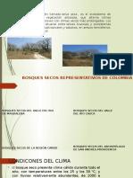 Ecosistema Bosque Sec