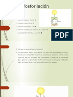 Fotofosforilacion