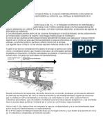 Placenta. Anatomía y Fisiología