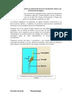 fitohormormonas vegetativa auxina