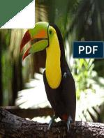 Tucan en Belice