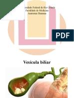 Seminário Anatomia Humana - Caso Clínico Colelitíase