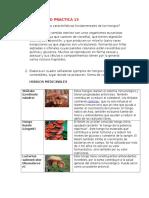 CUESTONARIO-PRACTICA-13.docx