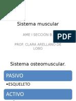 Sistema muscular 2003.ppt