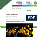 Ensayo biologia celular