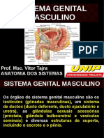 Aula de Sistema Genital Masculino