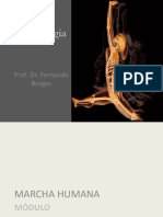 Aula 14 - Cinesiologia Anatomia Funcional - Marcha Humana