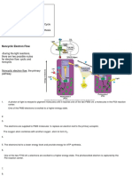 Light Reaction Electron Pathway