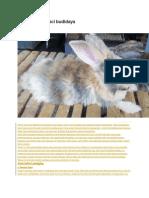 Jenis-jenis Kelinci Budidaya