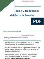Transcripcion y Traduccion (Del Gen a La Proteina)