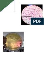 Bacteriologia aplicada.docx