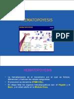 3 HEMATOPOYESIS (1)